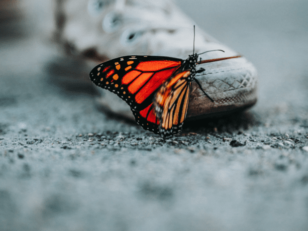 How to become a butterfly – thriving in a VUCA world